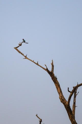 Spooted a Kingfisher!